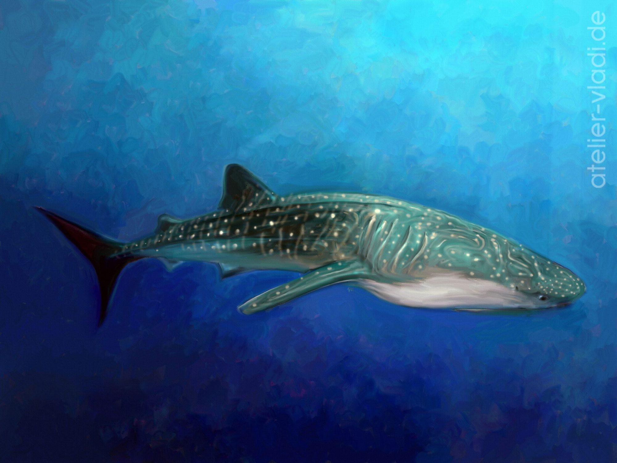 Walhai Meer Ozean Ocean Whaleshark